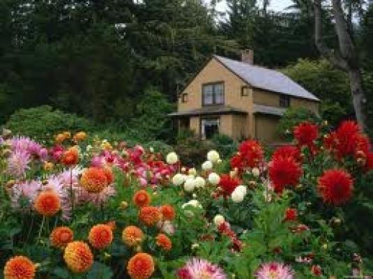 Cvijece  large